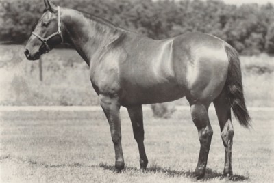 Terrybrook Farms archive photo of a horse