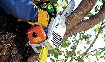 Olsen Tree Experts in CT specialize in  tree removal and pruning