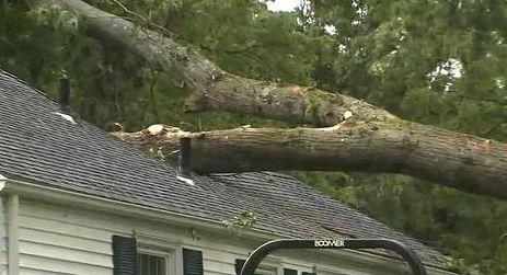 Call us for help when a tree causes a problem as serious as this