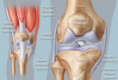 Physical Therapy for ACL