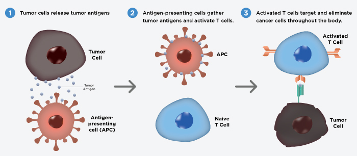 Antigen Cells