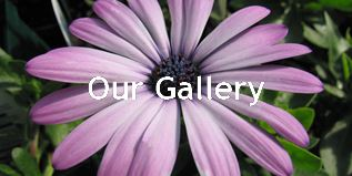 Looking at our photos is the next best thing to visiting us in person at Wanczyk Nursery