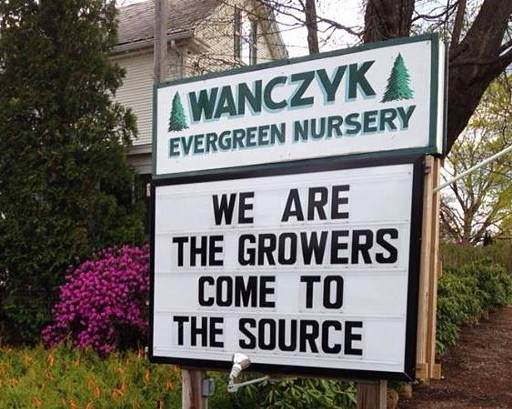 Wanczyk Evergreen Nursery sign in Hadley, MA