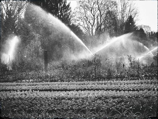 Our service at Wanczyk Nursery is as old fashioned as this sprinkler system.