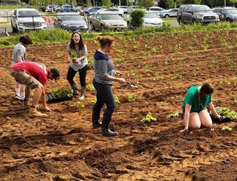 School gardening photo taken at Joseph A. DePaolo Middle School, Southington, CT