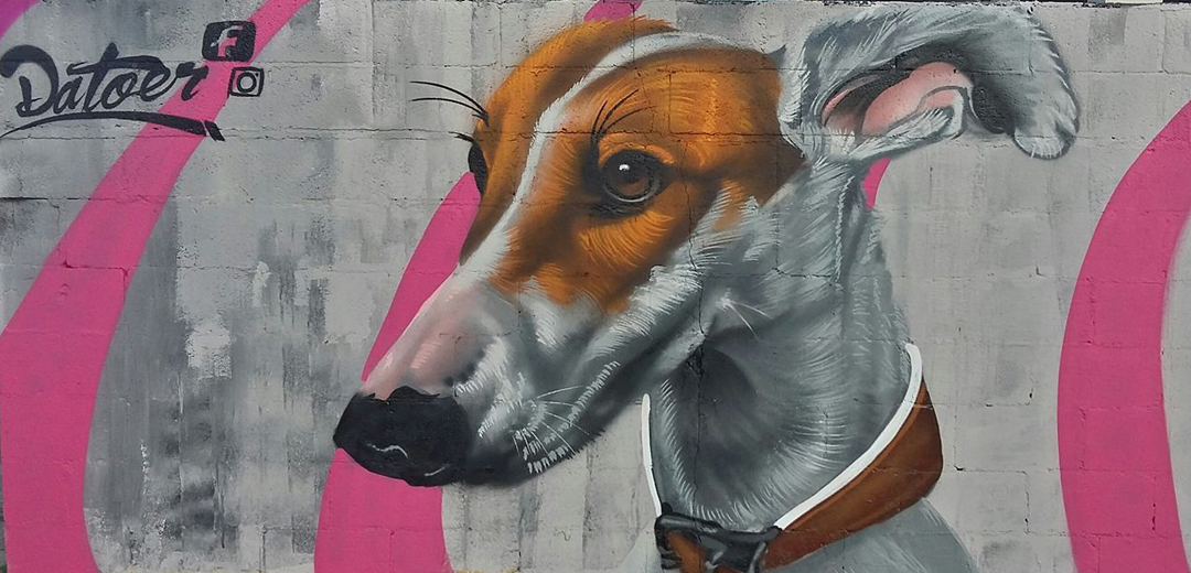 dog, white, brown, wall, graffiti, merida, mexico