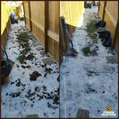 poooh busters before and after winter scooping service