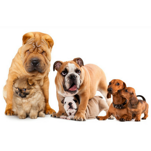 a pack of dogs, various breeds sitting together on white background
