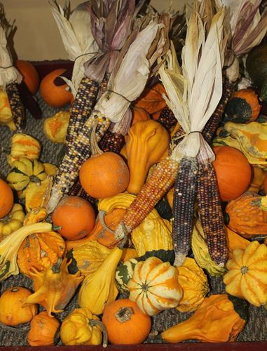 Fall vegetables merchants and consumers use primarily for decor