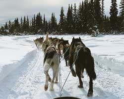 Iditarod and  Aurora Adventure