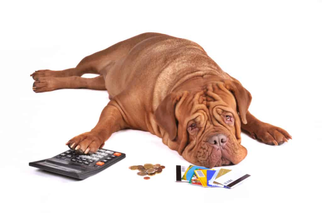 sad dog with credit card, calculator and money on white background