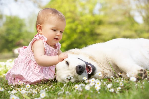 baby girl in summer dress sitting on grass petting dog
