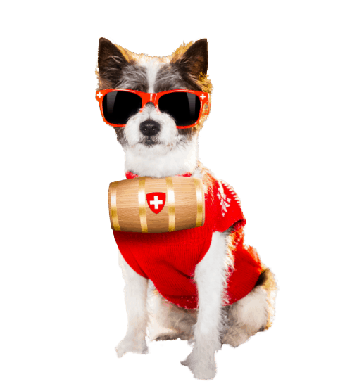 cool dog wearing sunglasses and a red sweater with a rescue barrel around his neck