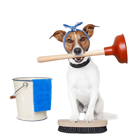 jack russell terrier dog with cleaning supplies
