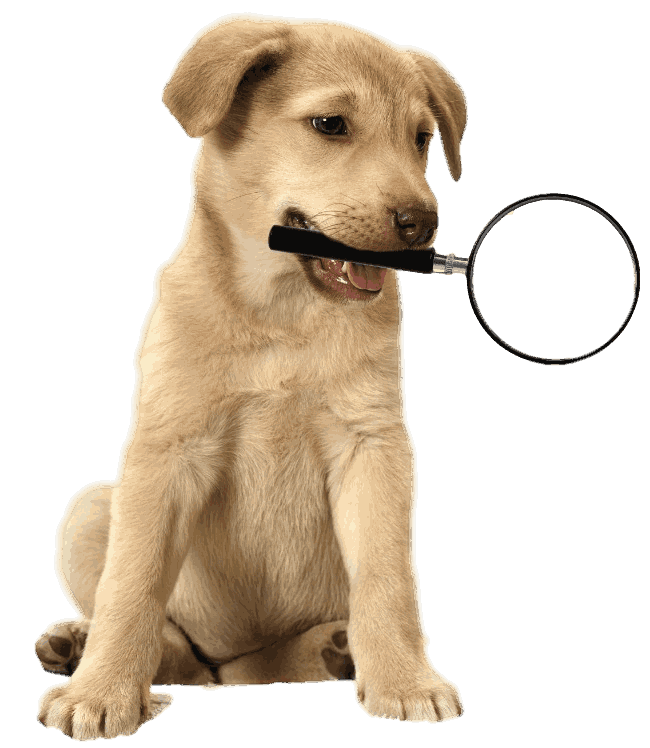 golden retriever puppy holding magnifying glass on transparent background