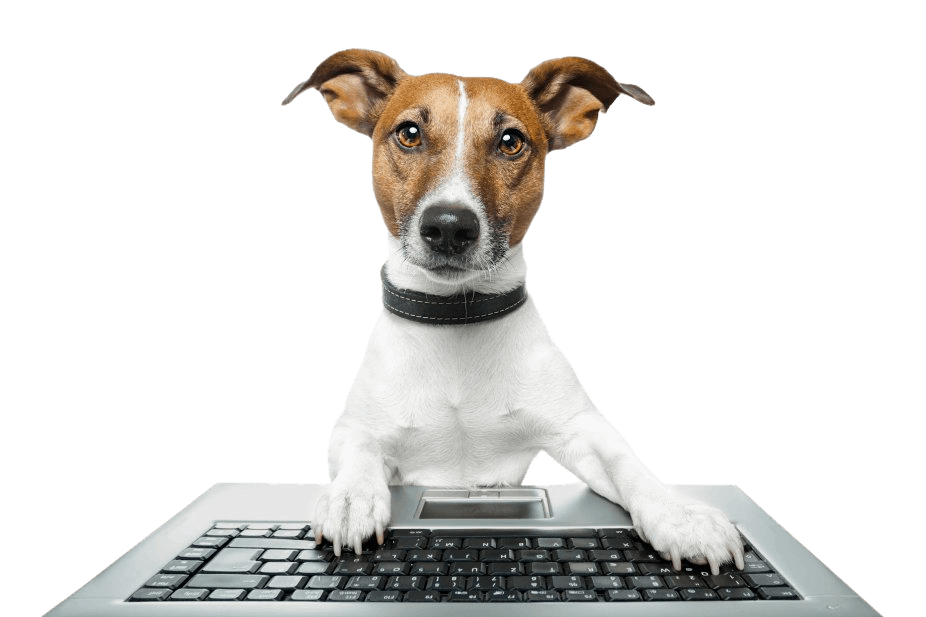 jack russell dog using computkeyboard