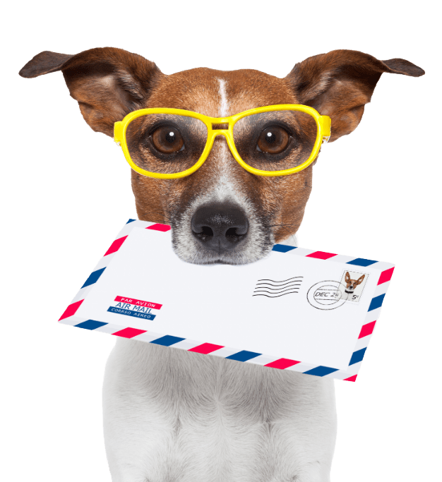 Jack Russell dog holding an envelope and wearing yellow eye glasses on transparent background
